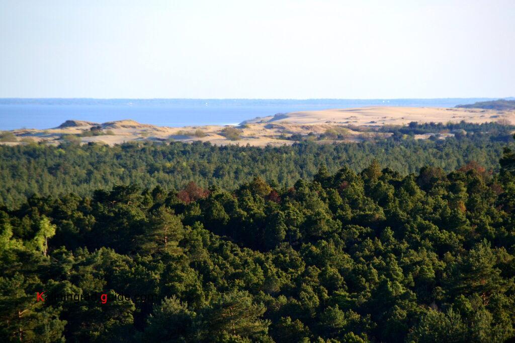 Вид с высоты Мюллера, Куршская коса