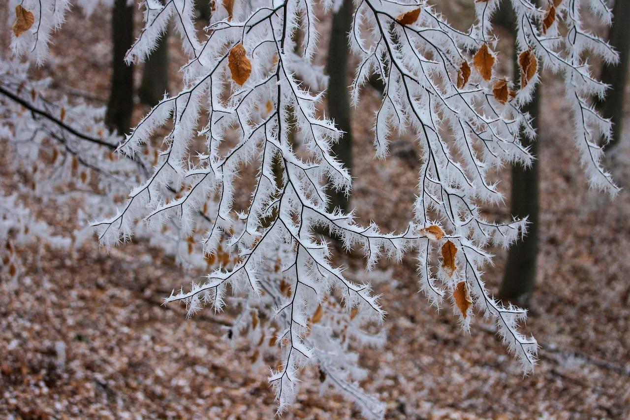Калининград зимой что посмотреть