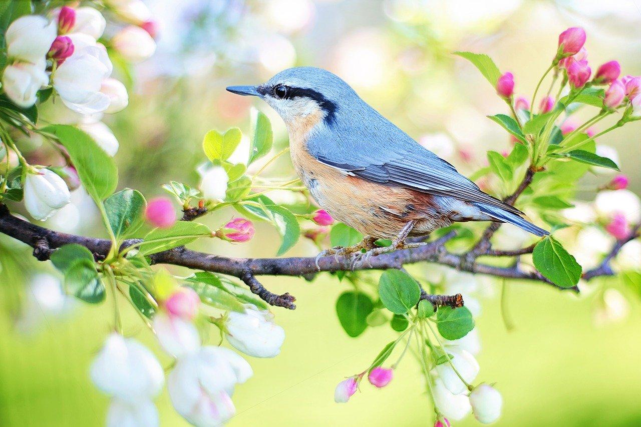 Весна в Калининграде